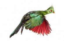 Bird av Andrew Zuckerman